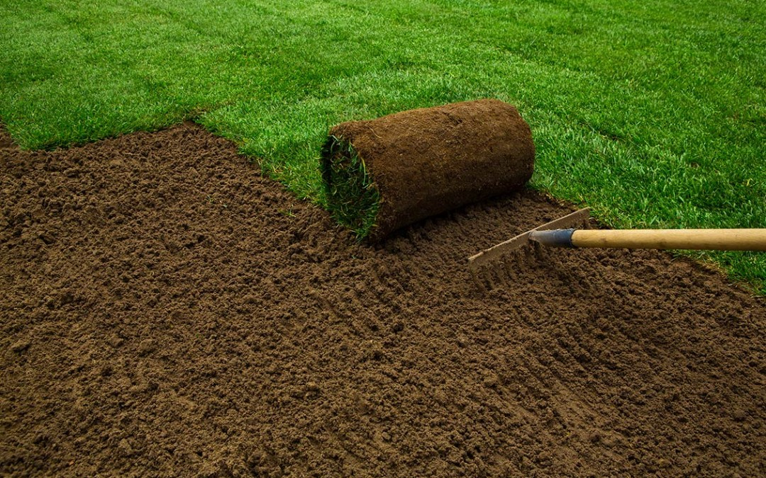 Why skip hire is the best solution for a DIY garden clearance?